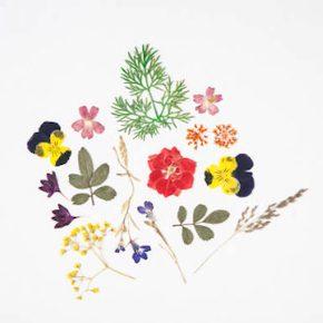 押し花タトゥーを自作する