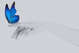 幸せの印である青い蝶