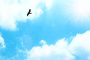 大空を飛ぶ鳥