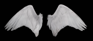 天使の翼(羽根)