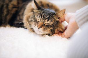 人間に可愛がられる猫