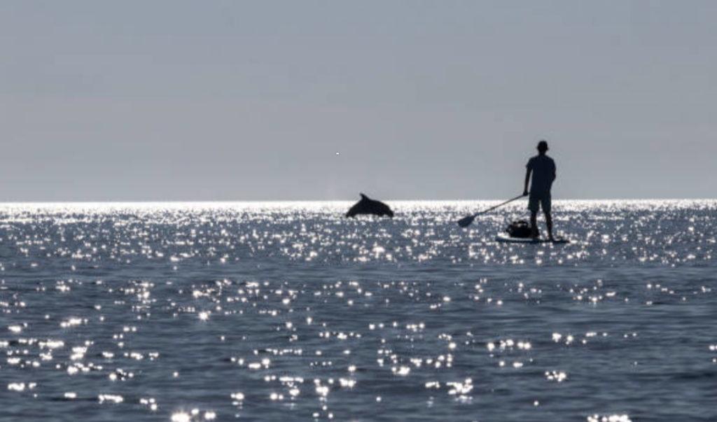 イルカとマオリ族