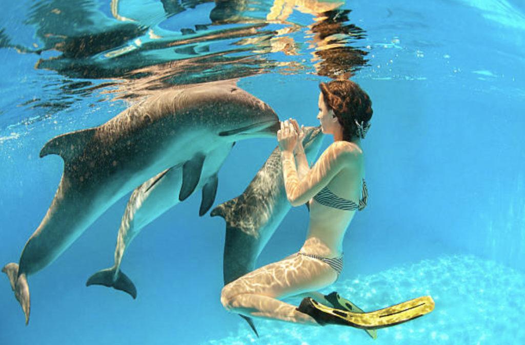 イルカと女性の友情