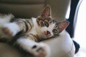 マイペースに休んでいる猫