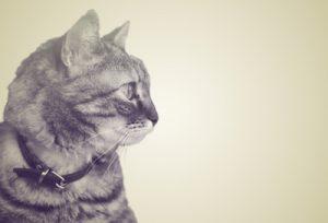 悪霊を真剣に見つめる猫