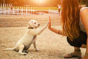 犬のモチーフが意味する忠誠心のイメージ