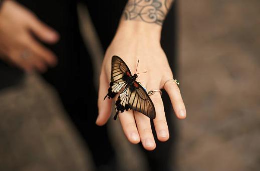 蝶とタトゥー