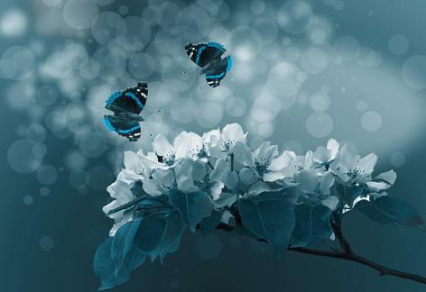 蝶のカップル