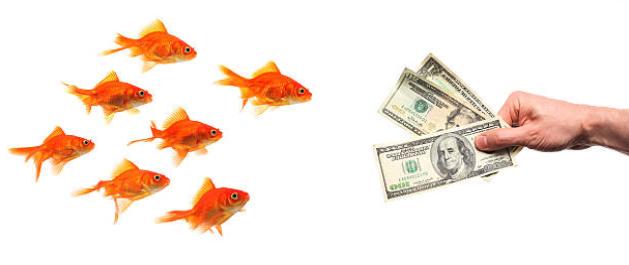 金魚とお金
