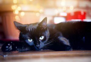 くつろいでいる黒猫
