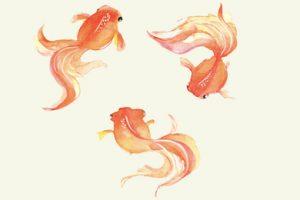 ヒラヒラ泳ぐ金魚のイラスト