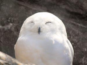 笑顔のフクロウ