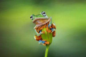 こちらを見つめる蛙(カエル)