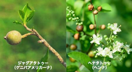 ジャグアとヘナの違い(原料)