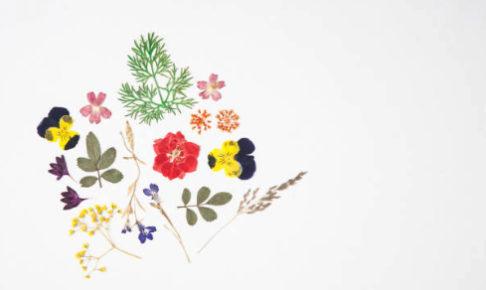 押し花の作り方