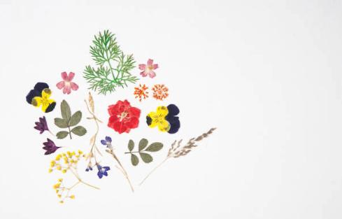 押し花タトゥーを自作しよう!代表的な押し花の作り方4つを紹介!